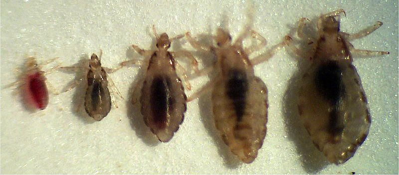 Can You Get Bed Bugs From Someone Visiting Your Home