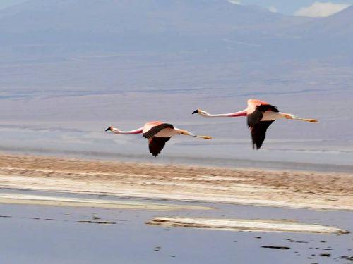 Laguna Chaxa in the Atacama Desert